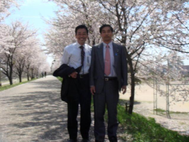 高時川の桜を愛でる会