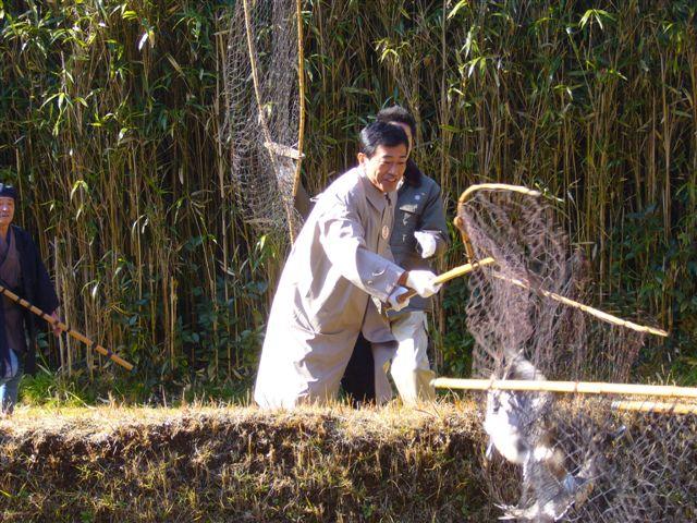 宮内庁新浜鴨場での捕獲と放鳥(1)